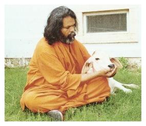 Swamiji mit Kalb.jpeg